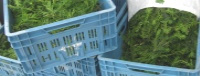 Breng je taxussnoeisel vanaf 15 juni naar het containerpark